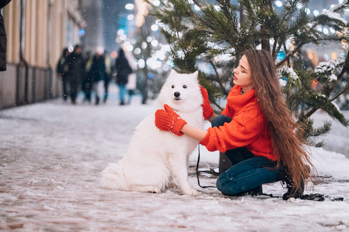 A dog on the street in winter
